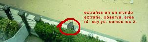 extrano1.jpg